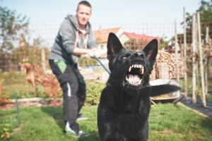 dogs-arent-the-only-aggressive-animal