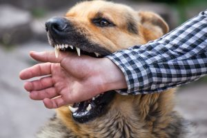 Ensure That Dog Bites Don't Happen By Just Putting Your Pooch Away