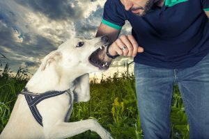 Choose A Reputable Personal Injury Lawyer To Recover Compensation For Dog Bite Injuries