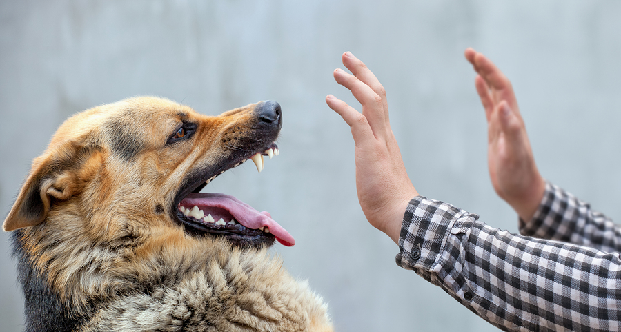 What To Do After Suffering A Dog Bite