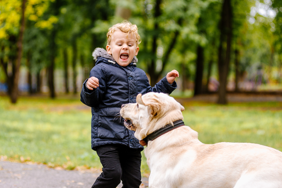 4-things-to-do-when-your-child-gets-attacked-by-a-dog
